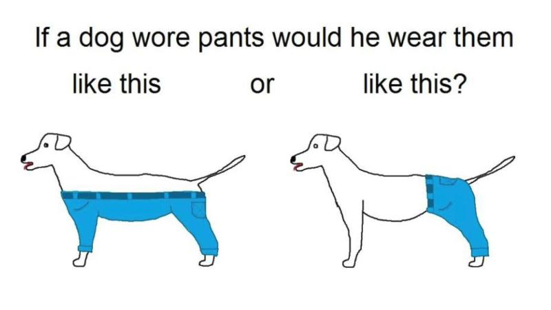 Large Of If A Dog Wore Pants