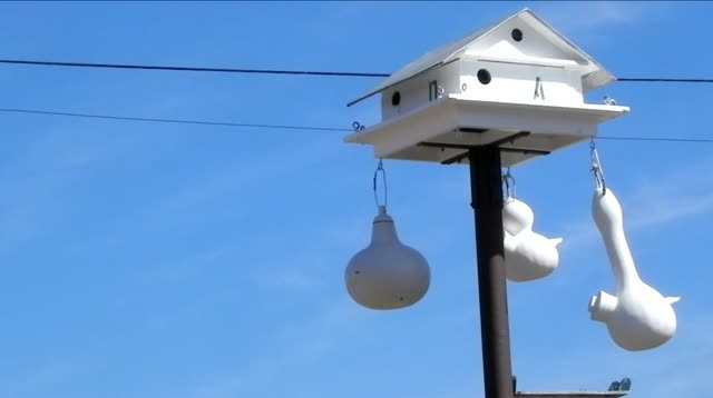 My Purple Martin Movie