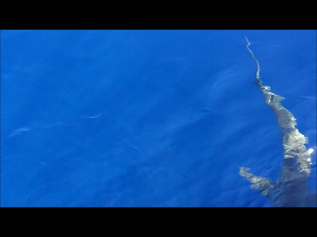 A shark attracted to our bandit reel fishing