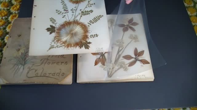 Herbarium Book Care and Restoration