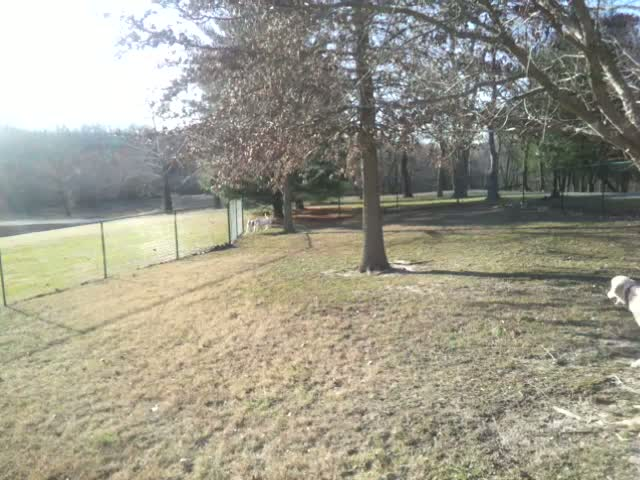 Nice cool day, perfect for running at the Murphysboro Dog Park