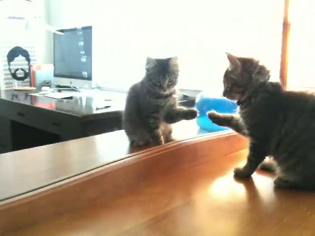 Kitten Meets Kitten