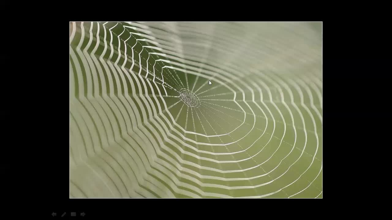 Tips on Shooting Spider Webs