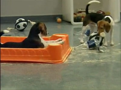 Dogs get exercise in labs