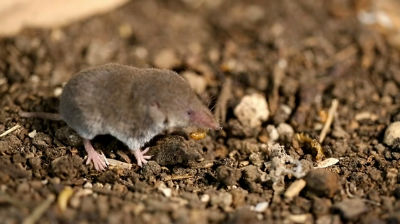 least shrew 720p for blog