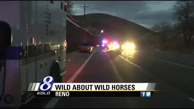 Wild Horse Advocates Ask For Cooperation