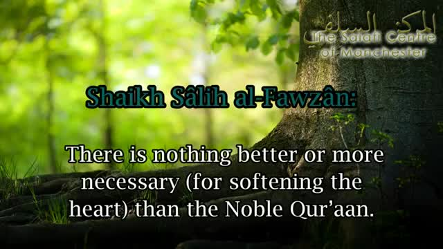 What Will Soften The Hearts  Al-Allamah Salih al-Fawzan