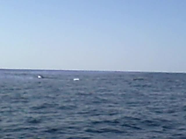 Right Whales Up Close