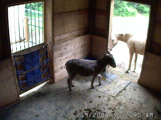 Rocket Man Keeping Lily out of barn