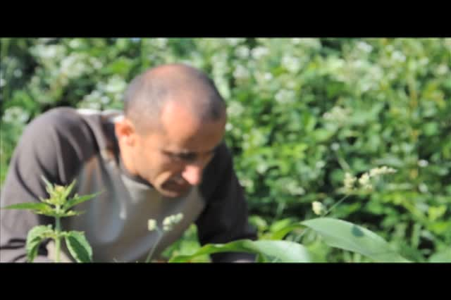 Treeyo Video