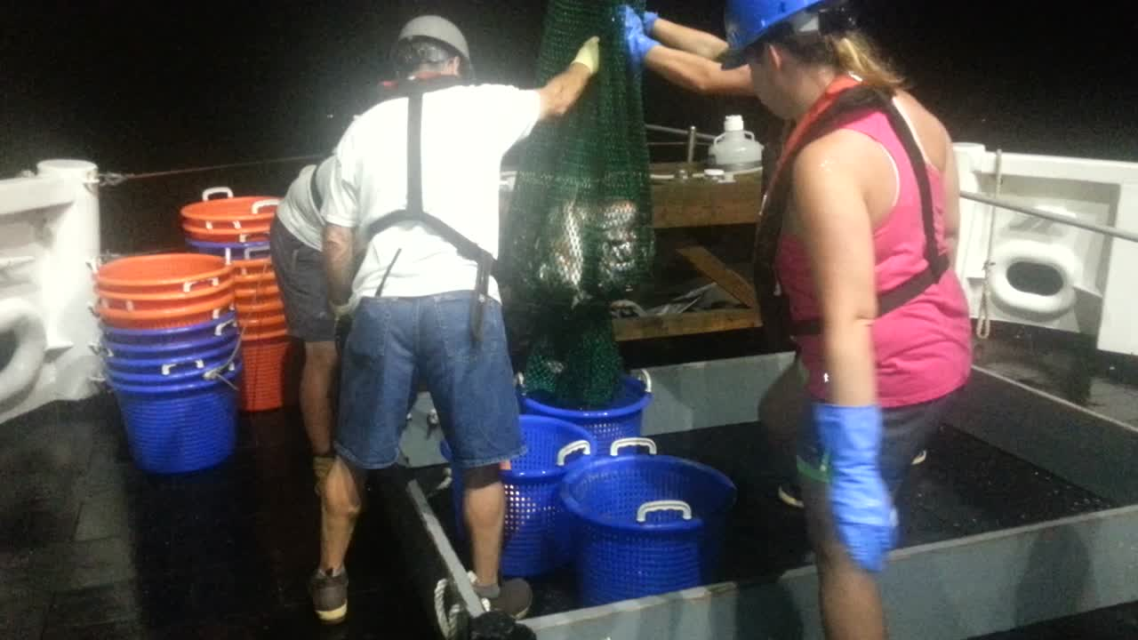 Mike, Warren, Robin, Holland and Taniya bringing in a trawl net