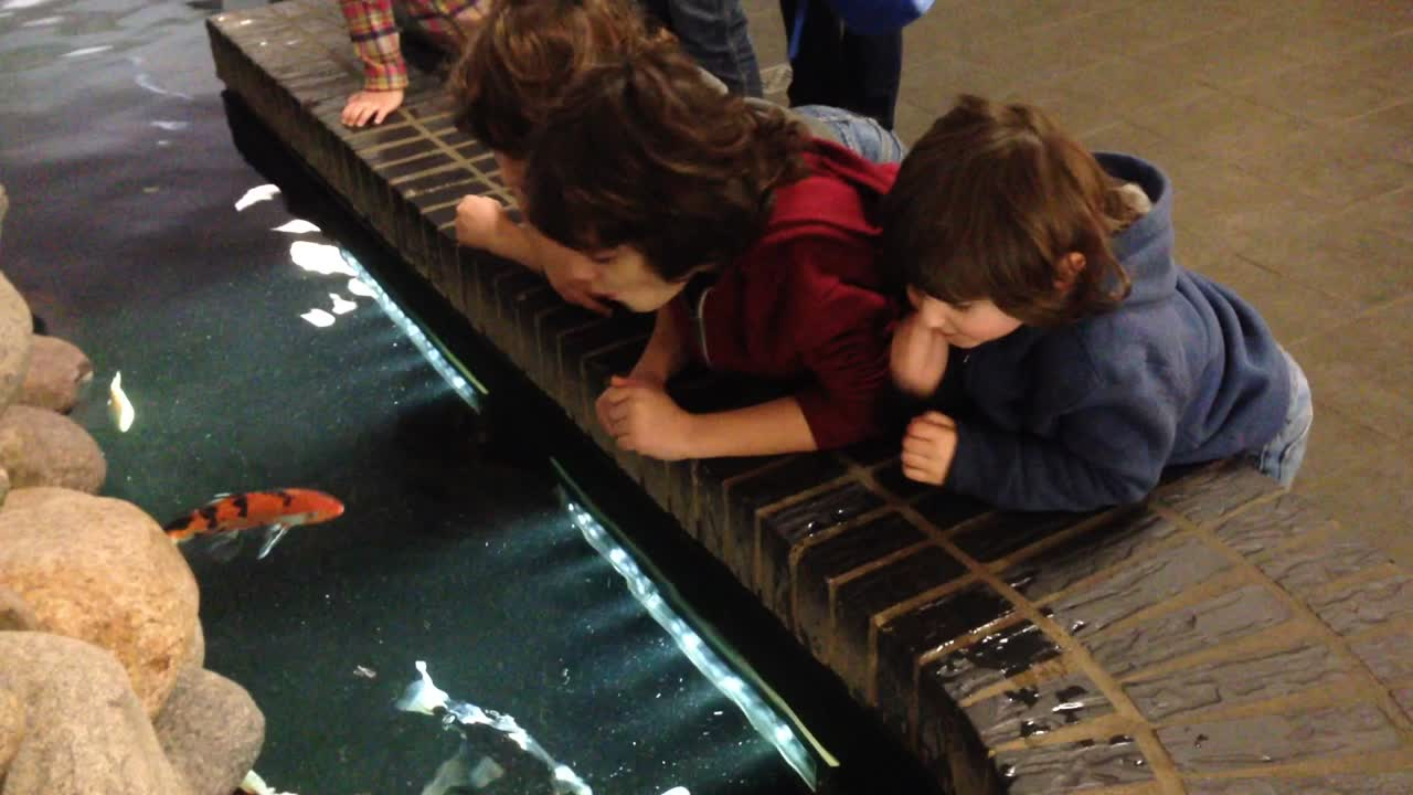 Petting the Koi Fish – Berlin