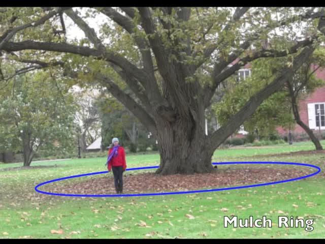 Historic Trees