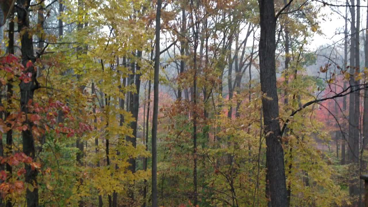 November rain 2