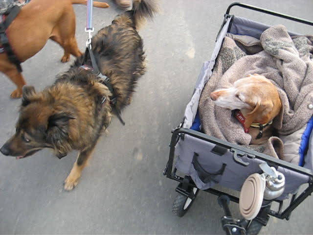 The Three-Dog Cam