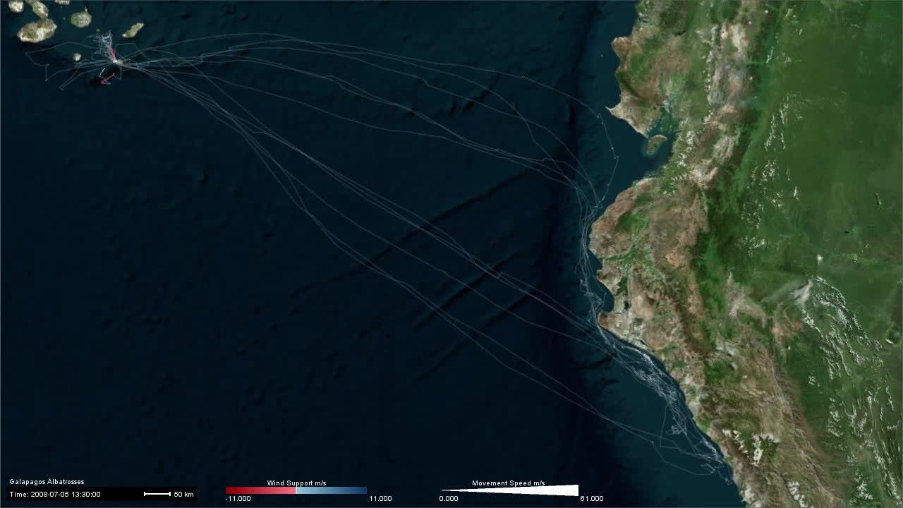 Albatross_WindSupport_MoveSpeed