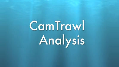 CamTrawl Analysis Take2