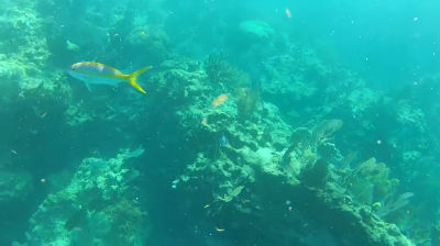 Snorkeling in Looe Key (video)