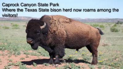 Bison CCSP April 2012