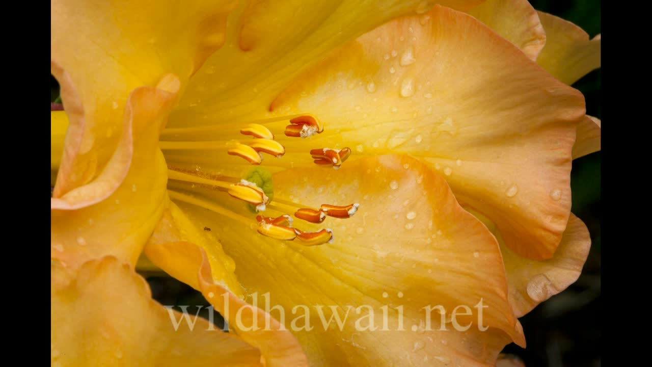 flowers 3.11.15