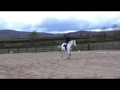 Paddy dressage 1