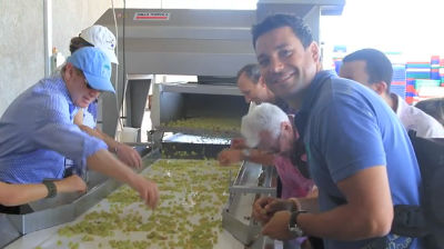 Sorting Grapes at Vines of Mendoza
