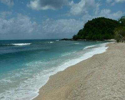 Normanby Island Coral Shore 1