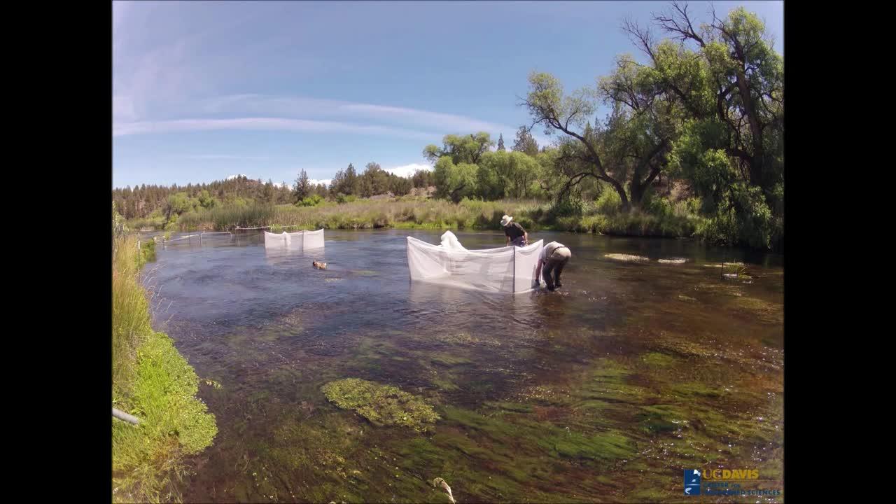 Building fish cages/Carson Jeffres