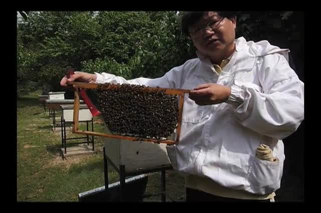 Lesster inspecting hive before training starts.