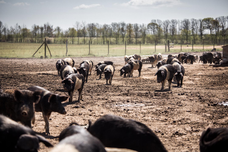 viertelvor-meinekleinefarm-marcuswerner-18