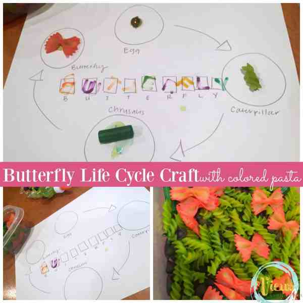 This butterfly life cycle craft uses colored pasta to represent the stages of the butterfly life cycle. Making a perfect, hands-on science project for kids!