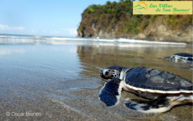 Reserva Playa Tortuga Donation