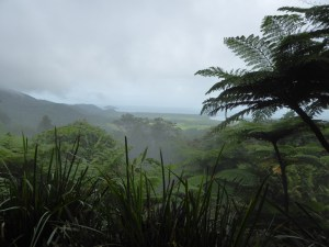 P1020253 (The 23rd of July 2015 – Daintree village to Cap Tribulations)