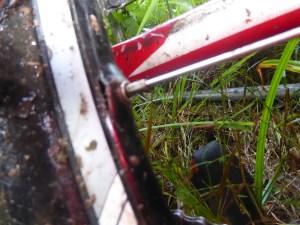 wpid-1020217.jpg (The 21st of July 2015 – Stewart Creek backtracking to Mossman)