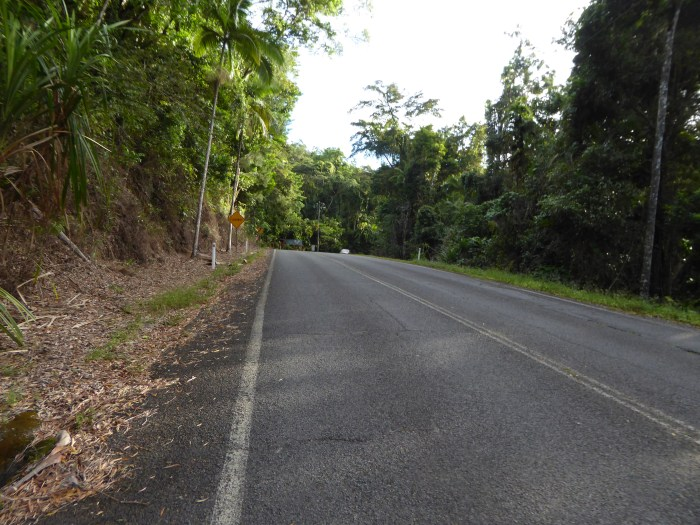 The good but dangerous road to Daintree village. The same road is being used to get to Cap Tribulations