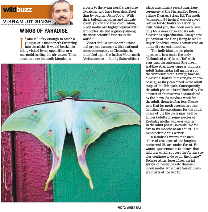 Hindustan Times Clipping - The Indian Moon Moth