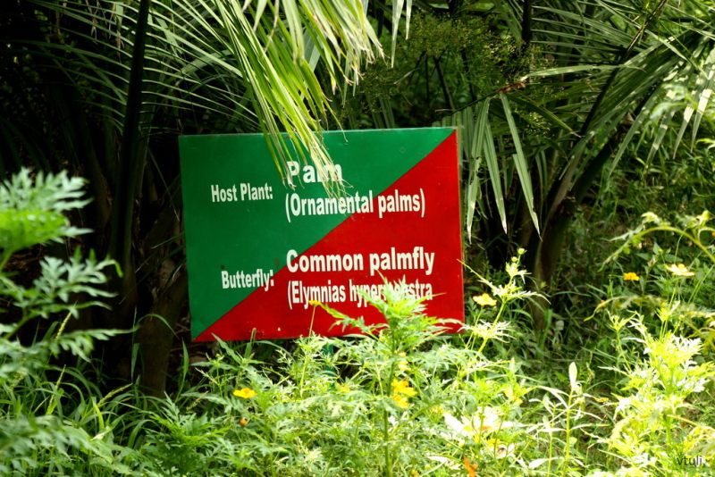 Host Plant #1 - Butterfly Park Chandigarh