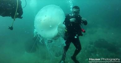 Видео: Дайвер повстречал гигантскую медузу во время своего погружения у берегов Мексики.