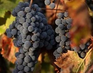 viniditalia Raisins