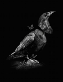 Oiseau_obery