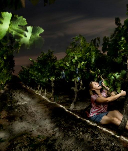la-vignereuse-2