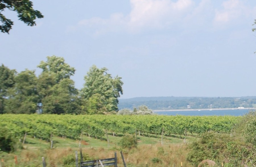 Greenvale's vineyards; the Sakonnet River is in the background