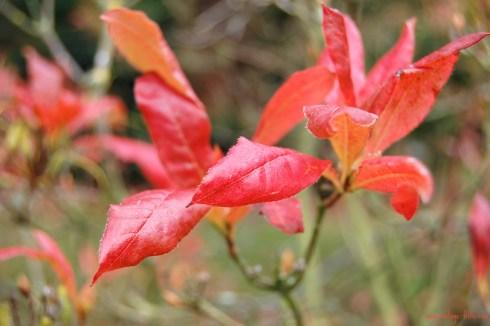 Autumn Colours 5