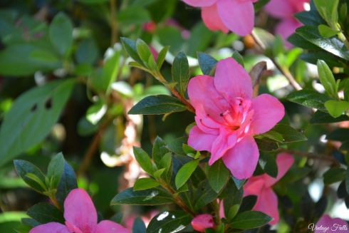 Flowers Isabella Plantation