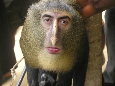 La scimmia dal volto umano