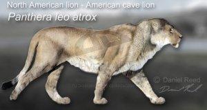 PantheraAtrox