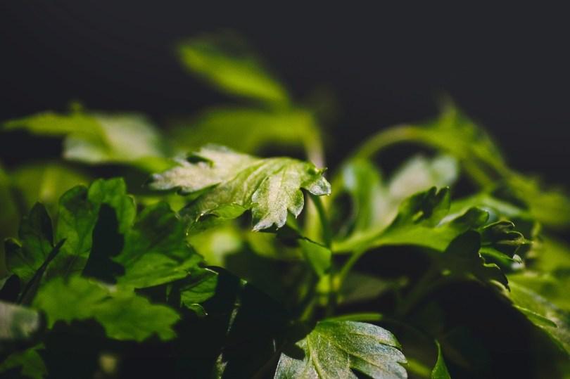 parsley-931808_1280