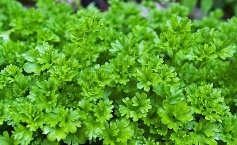 parsley-1444019_960_720