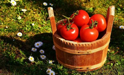 tomatoes-bucket-stock-Photo-Alexandra-München