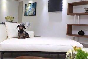 Las mascotas son bienvenidas en el Costa Bahía Hotel & Convention Center en Guayanilla. (Facebook / Costa Bahía Hotel)